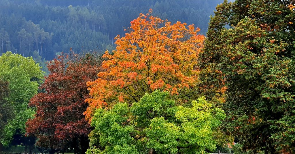 Kontraste in der Wahrnehmung beleben die Genusserfahrung. Ein einfacher Beleg : die herbstlichen Farbkontraste der Bäume auf diesem Bild. Was bei der Planung von Genussmomenten in Bezug auf Kontraste zu bedenken ist, um besonders schön genießen zu können, erfährst du hier.