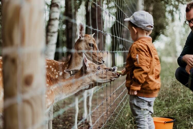 Zoobesuche sind für Kinder eine wichtige Erfahrung, aber auch für Erwachsene immer wieder belebend, werden doch oft Erinnerungen an Früher geweckt. Im Zoo ist man besonders fokussiert auf das Beobachten von Tieren, etwas, das im Alltag des modernen Menschen kaum noch vorkommt und deshalb als besonderer Genuss empfunden werden kann. Tipps für weitere gemeinsame Genussmomente gibt es auf dieser Seite.