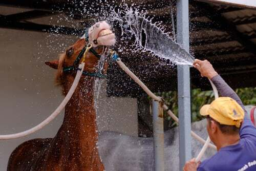 Genussvoll duschen - Ob zum Tagesbeginn oder nach körperlicher Anstrengung. Eine bewusst erlebte, genussvolle Dusche weckt die Lebensgeister. Noch mehr Ideen, wie du deinen Körper genussvoll in Schwung bringst , findest du hier.
